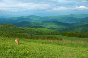 Jordan in North Carolina by numapompilius