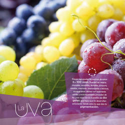 Infographics Fruit Station by PauDI