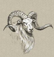 Ram by EDC9AF