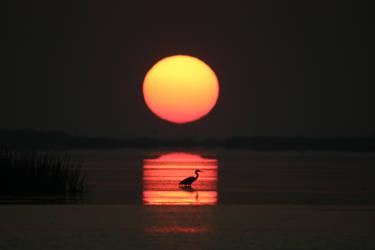 Sunrise 8 of 9 by daisytex