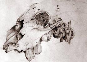 Animal Skull by yoshigizmo