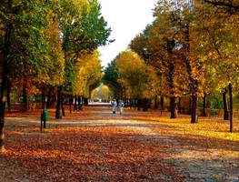 Autumn by rockmsk