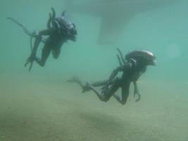 Xenomorphs Swimming by Krulos