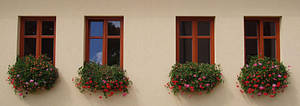Windows by Pitel