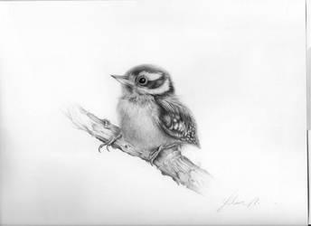 woodpecker by Conbatiente
