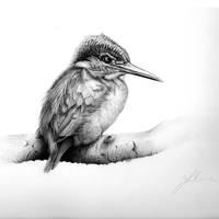 Kingfisher by Conbatiente