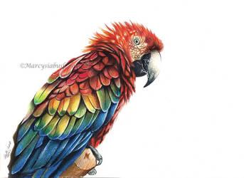 Parrot Magic by Marcysiabush