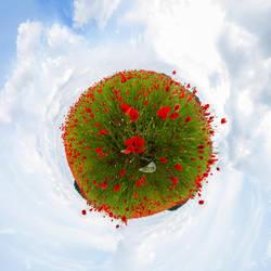 Poppy world by Quincula