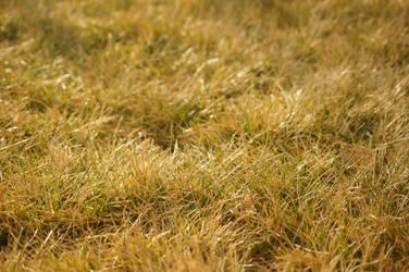 Winter Grass by TheBirdsFeathers