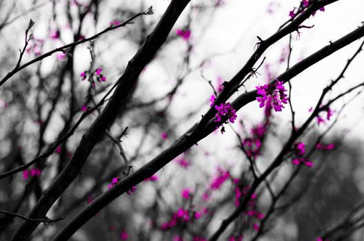 Saturation On A Rainy Day by JonUriah