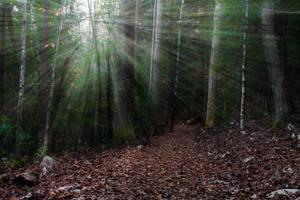 Evening Trail by JonUriah