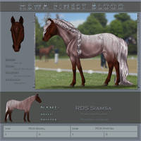 HSWA Finest RDS Siamsa by Jullelin