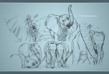 Elephant Study by Jullelin