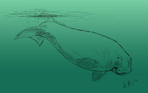 The Manatee by Jullelin