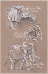 Elephants by Jullelin