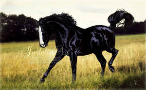 The Black Stallion by Jullelin