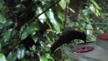 humming bird by PineapplesAreReal