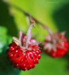 Mini Strawberries 2 by HoangyPongy