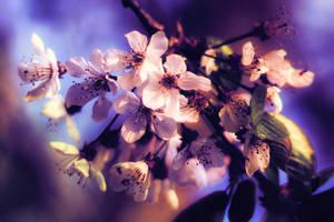 spring by schafsheep