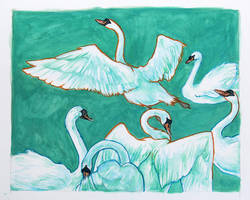 Swans by galazy
