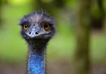 Emu by Veneros