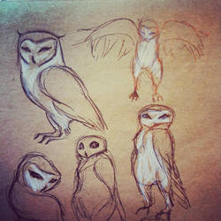 Owl 03 by Monaku