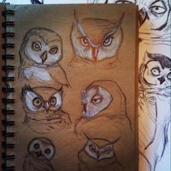 Owl 04 by Monaku