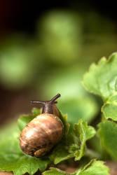 Snail by finkycake
