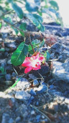 flower/photography 1 by Thekomor