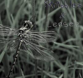 Dragonfly 1   Set DLM by SkriBlerLenZ