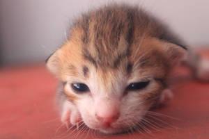 little cute kitty cat by cheelzthesign