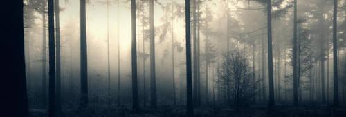 Misty Morning by Burning-Liquid