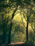 Evergreen by Burning-Liquid
