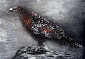 The Raven by IrisGrass