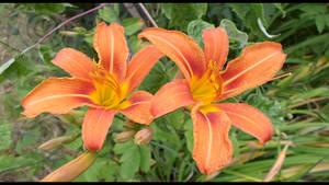Flower Twins by KillerSandy