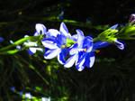 Blue Dreams by ZombieInn