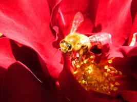 Sweet as Honey by ZombieInn