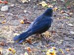 Kay Likes Dirty Birds by ZombieInn
