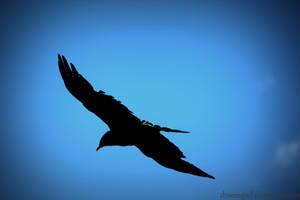 Fly... by droemsjael