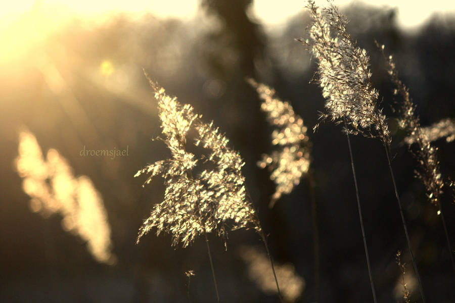 First rays of the Sun... by droemsjael