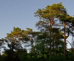 Golden trees by EylianaStuff