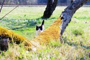Cat and spring by Astrazzz