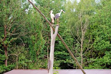 Storks by Astrazzz