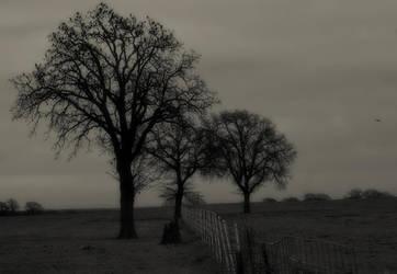 calm of winter by Wanderingstill