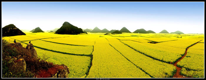 Yellow Paradise by DenisLi