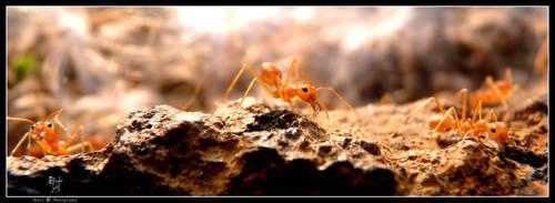 Call Me Master Ant by DenisLi