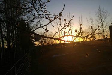 Setting Sun by Oniiix