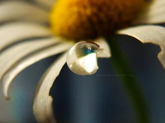 Daisy Dreams 3 by onixa