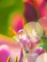 :RAINBOW IV: by onixa