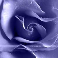 :Blue Rose: by onixa
